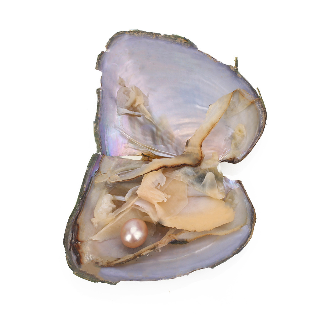 2DCC-Love-Wish-Pearl-Freshwater-Oyster-Mussel-Shell-Beautiful-DIY-7-5-6-5-1CM
