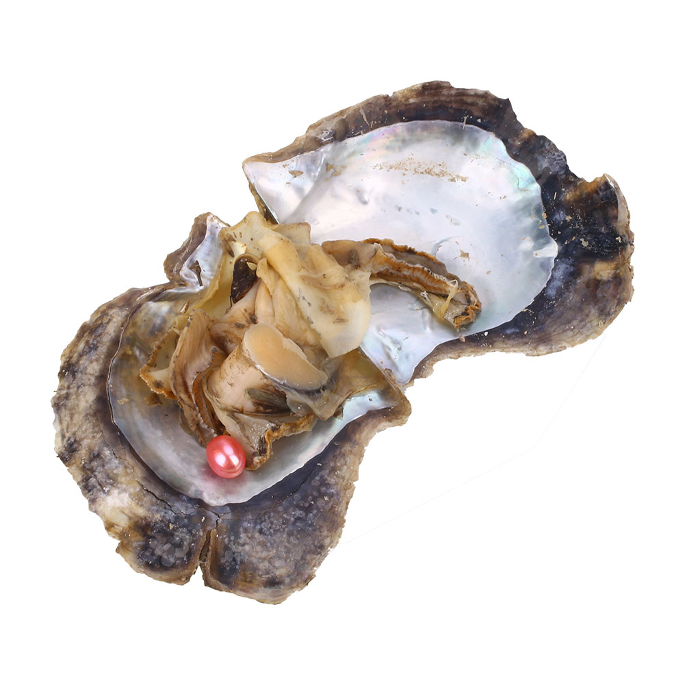6563-Seawater-Freshwater-Individually-Wrapped-Akoya-Oysters-with-Pearls-Jewelry